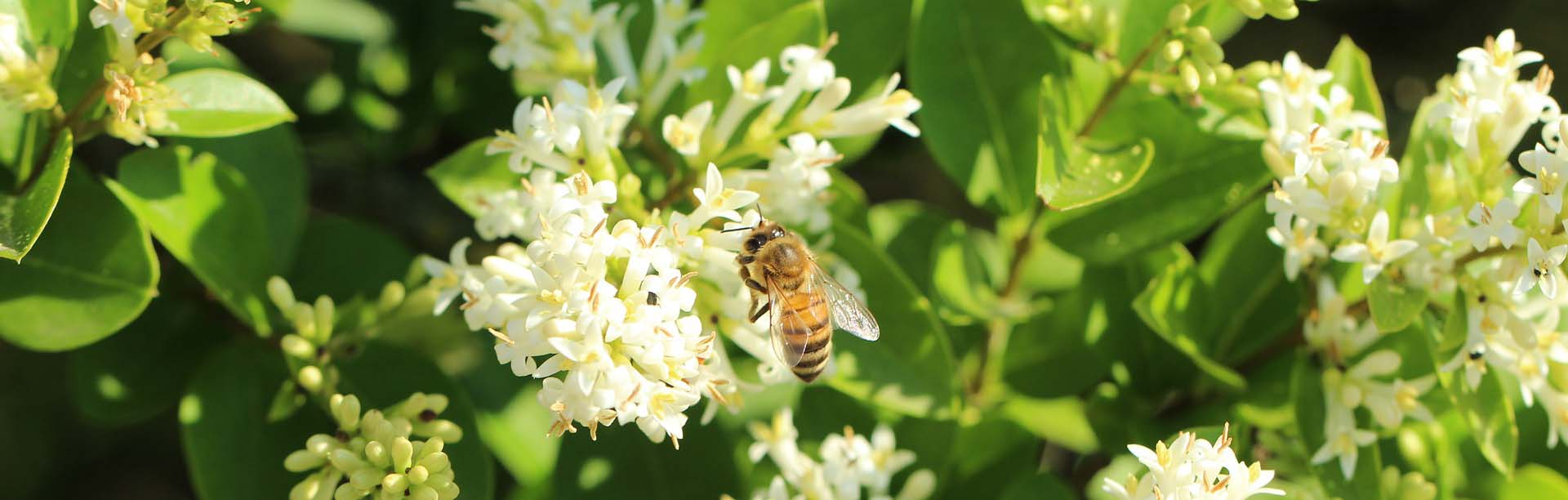 integratori propoli da planetbio naturali api